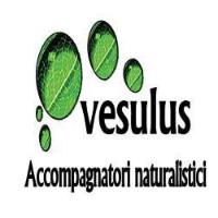 immagine di Vesulus